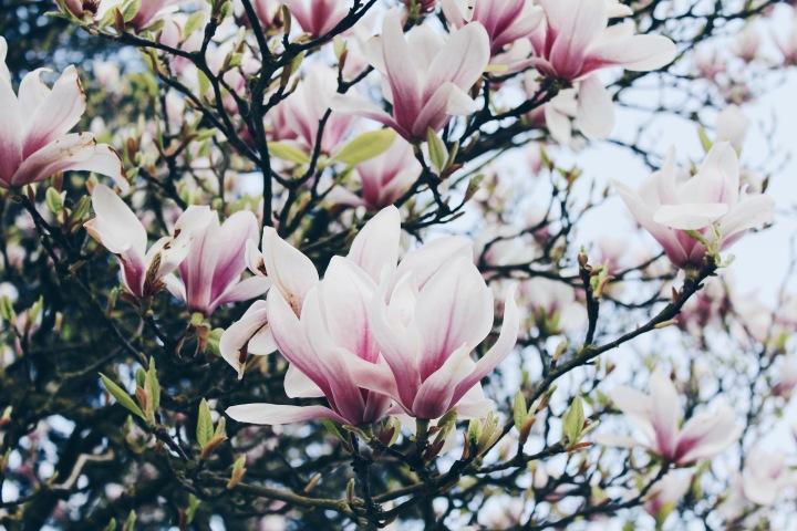 à-fleur-de-peau-dresscode-audrey
